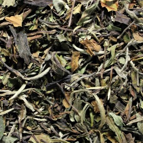 China Pai Mu Tan white Tea